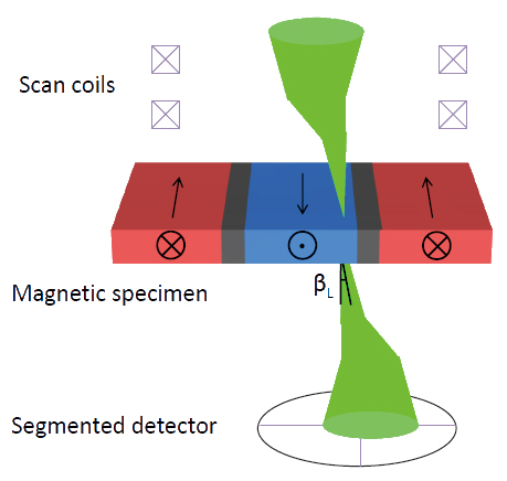 Fig. 1 Diagram illustrating the concept of DPC STEM imaging. Lorentz deflection of the focused electron probe, through an angle ßL, by domains in a thin magnetic sample is detected using a segmented detector.