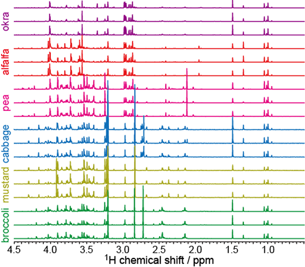 SSeries of  1H spectra of polar metabolites in sprouts