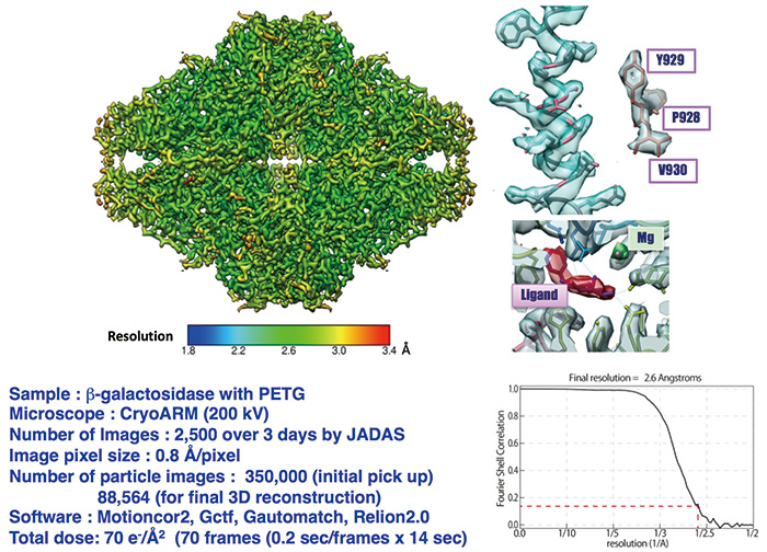 Structure of β-galactosidase at 2.6 Å resolution by CRYO ARM(TM).