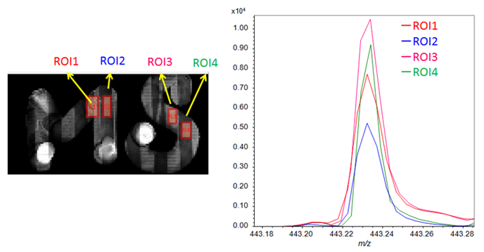 Figure 6. The ROI mass spectra from the conductive parts (ROI1 and -3) and non-conductive parts (ROI2 and -4) on model substrate with gold deposition.